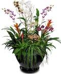 Tropical Paradise Garden