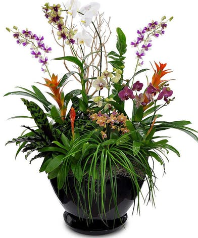 Tropical Paradise Garden - Orchids Designs - Fort Worth (TX) Delivery