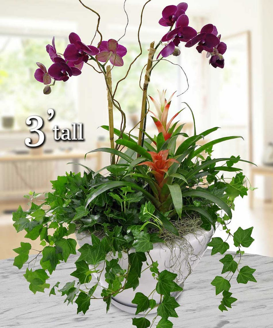 Hawaiian Orchid Garden - Fort Worth, TX Delivery