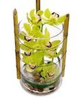 Extravagant Orchids