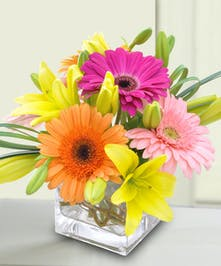 Orange and pink Gerbera daisies, roses, and lilies in a clear glass cube vase.