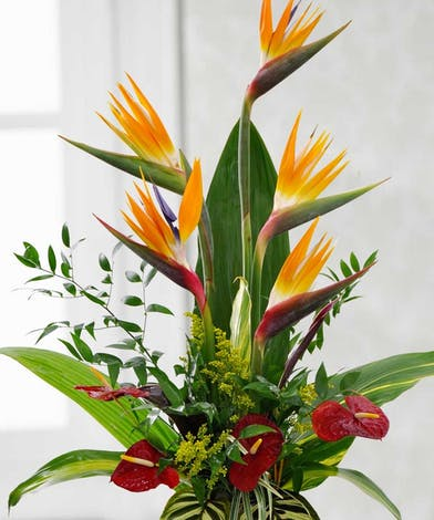 Birds of paradise, red antheriums and tropical foliage in a charming container.