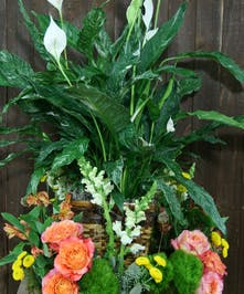 Sympathy basket arrangement with a lush spathiphyllum plant accented with garden roses, snapdragons and more.