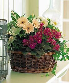 Assorted green and blooming plants in a pretty garden basket.