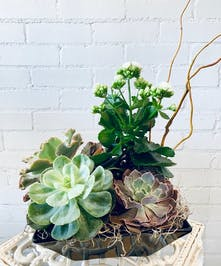 Whimsical Succulents