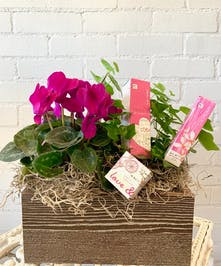 Blooms & Perfumes