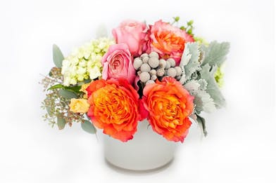 Coral roses, hydrangea, brunia and dusty miller in a white ceramic container.