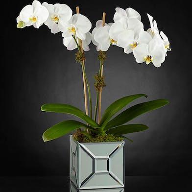 Elegant Orchids - Gordon Boswell Flowers