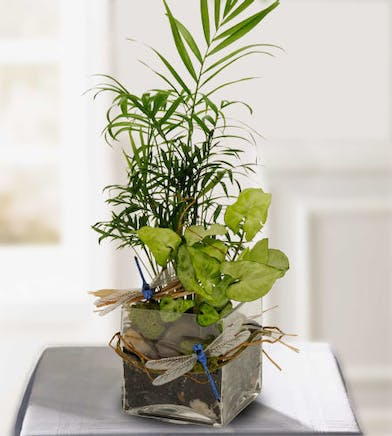 Assorted green plants in a clear glass cube vase.