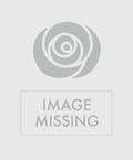 Lush Basket Garden