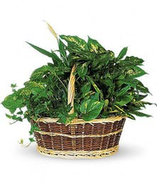 A lush assortment of green plants in a garden basket.