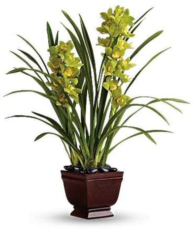 Chic container with orchids and bromeliad plants.