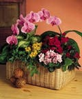 Garden Basket with an Orchid Plant