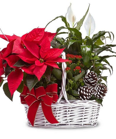 Wicker basket with a red poinsettia plant, blooming peace lily, pine cone accents and more.