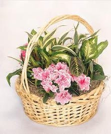 Basket filled with green plants and a touch of colored blooms.
