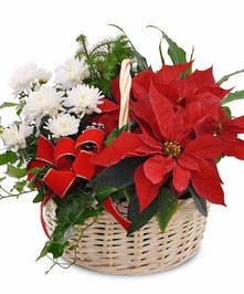 Holiday plant basket with a poinsettia, mum plant, Norfolk pine, dracaena and ivy.