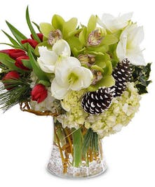Arrangement of white amaryllis, green orchids, red tulips and frosted pinecones in an elegant vase.
