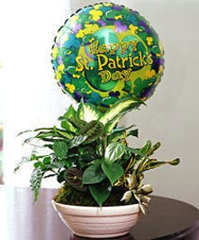 Green plant in a white ceramic dish with mylar balloon that says
