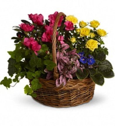 Basket filled with bright blooming plants.