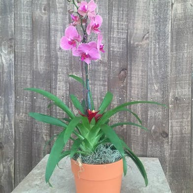 Tropical Garden Orchid Arrangement Fort Worth (TX) Gordon Boswell