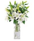 Winter White Lilies