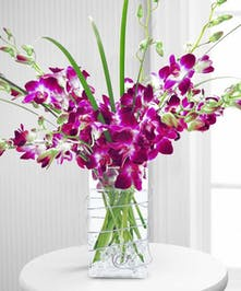Purple dendrobium orchids in an elegant rectangular vase.