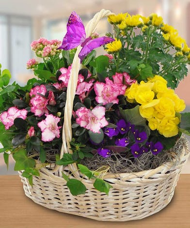 Green & blooming plants in a charming basket.