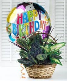 Woven basket with assorted green plants and a happy birthday mylar balloon.