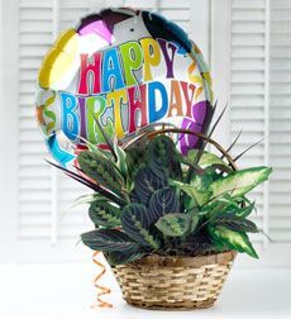 Woven Basket With Assorted Green Plants And A Happy Birthday Mylar Balloon