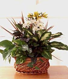 Basket of Blooms