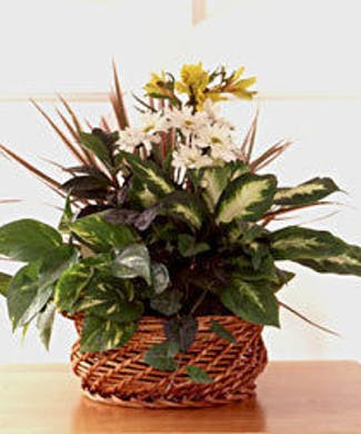 Flower Delivery To Magnolia Fort Worth Gordon Boswell Florist
