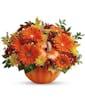 Country Pumpkin Premium